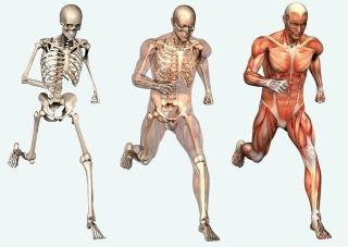 bone-system